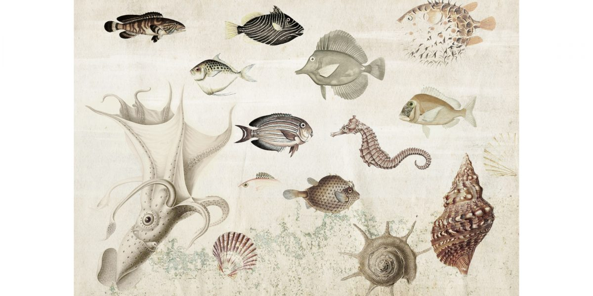 01 Aquarium