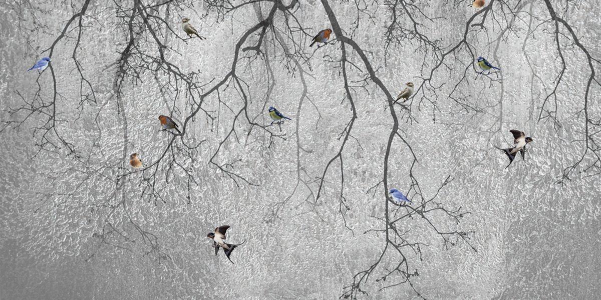 23_Birds